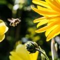 Mindestens 4 Sterne – 7e baut Insektenhotels